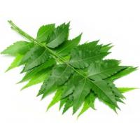 herbalhills prime Neem