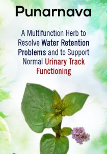 Ayurvedic Solution for UTI Treatment   Urinary tract