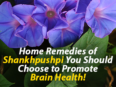 Shankhpushpi Powder, Shankhpushpi uses, Brain tonic, Herbal brain supplements, how to improve memory