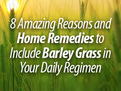 barley powder, what is barley used for, barley grass powder, barley grass benefits, barley use