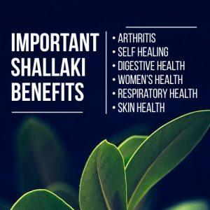 Shallaki benefits, Shallaki powder, Boswellia serrate, boswellia serrata uses, Where to buy Boswellia serrata