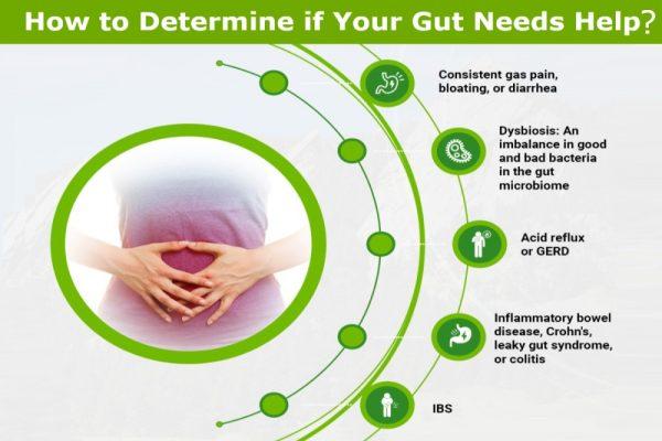 gut health remedies